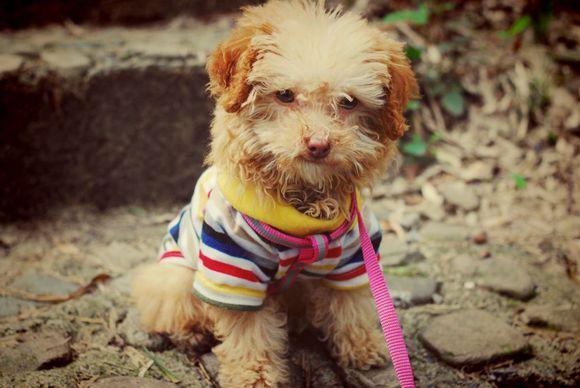 冬天宠物狗的美容护理